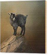 Little Rock Climber Wood Print