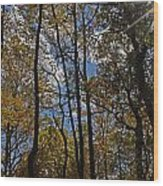 Little Round Top Trees Wood Print