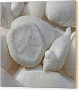 Little Sand Dollar And Seashells Wood Print