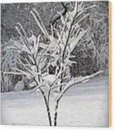 Little Snow Tree Wood Print by Karen Adams