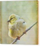 Little Softie Gold Finch - Digital Paint Wood Print