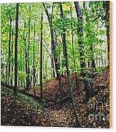 Little Valley 2 Wood Print