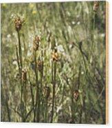 Little Weeds Wood Print