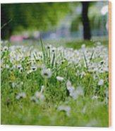 Little White Flowers II Wood Print