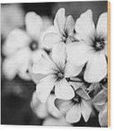 Little White Flowers. Wood Print by Slavica Koceva