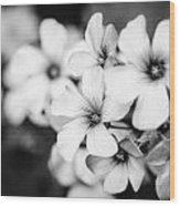 Little White Flowers. Wood Print