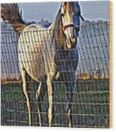 Little White Pony Wood Print