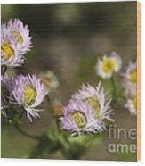 Little Wild Flowers Wood Print