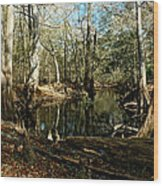Little Withlacoochee River Wood Print