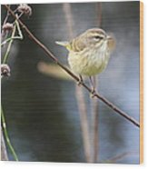 Little Yellow Bird In The Glades Wood Print