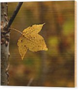 Little Yellow Leaf Wood Print