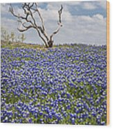Live Bluebonnets And Dead Tree Wood Print
