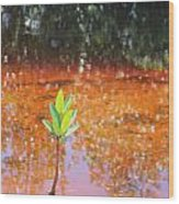 Live Mangrove Tree Wood Print