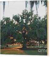 Live Oak Bathed In Evening Light Wood Print