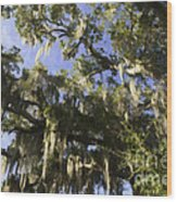 Live Oak Dripping With Spanish Moss Wood Print