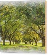 Live Oak Journey Paint Wood Print