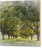 Live Oak Journey Vignette Wood Print