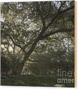 Live Oak Light Streaming Through Fog Wood Print