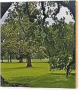 Live Oak Tree At Oak Alley Plantation Wood Print