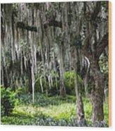 Live Oak Tree II Wood Print