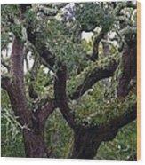 Live Oak Tree Wood Print