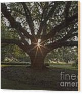 Live Oak With Early Morning Light Wood Print