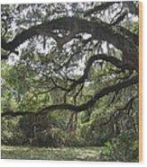 Live Oaks And Spanish Moss A Wood Print
