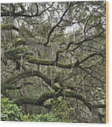 Live Oaks And Spanish Moss B Wood Print