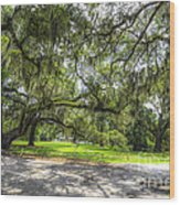 Live Oaks Dripping With Spanish Moss Wood Print
