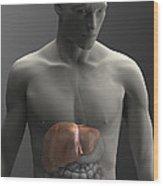 Liver Male Wood Print