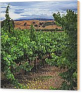 Livermore Vineyard 1 Wood Print