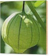 Living Lantern Wood Print