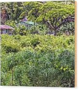 Living Off The Grid In The Waipi'o Valley Wood Print