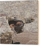 lizard from central Madagascar Wood Print