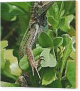 Lizard In Hedge Wood Print