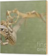Lizard On The Branch Wood Print