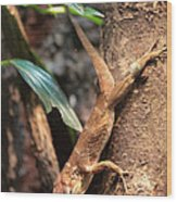 Lizard On The Tree Wood Print