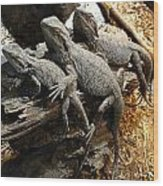 Lizards Wood Print by Les Cunliffe