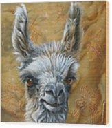 Llama Baby Wood Print by Jurek Zamoyski