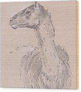 Llama Drawing Wood Print