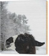 Llama Profile In Snowfall, Maine, New Wood Print