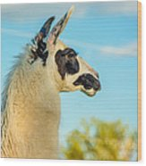 Llama Profile Wood Print