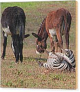 Lmao  Mules And Zebra - Featured In Wildlife Group Wood Print