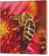 Loads Of Bee Pollen Wood Print