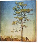 Loblolly Pine Along The Chesapeake Wood Print