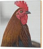 Local Poultry In Key West Wood Print