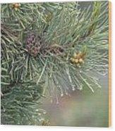 Lodge Pole Pine In The Fog Wood Print