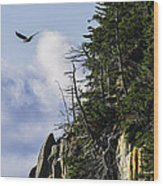 Lofty Bald Eagle Surveys Maines Bold Coast Wood Print