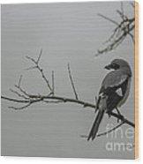 Loggerhead Shrike In Fog Wood Print by Cindy Bryant