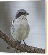 Loggerhead Shrike Wood Print
